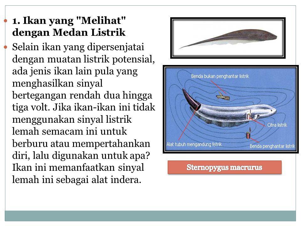 1. Ikan yang