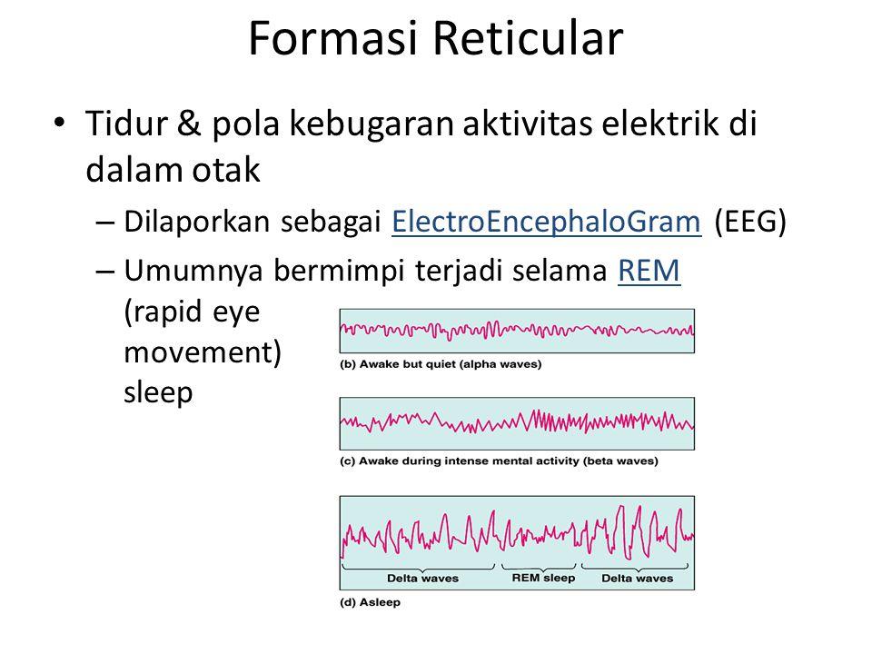 Otak Tengah Terlibat dalam integrasi informasi sensori – pengendalian visual reflexes – Pengendalian informasi auditory reflexes