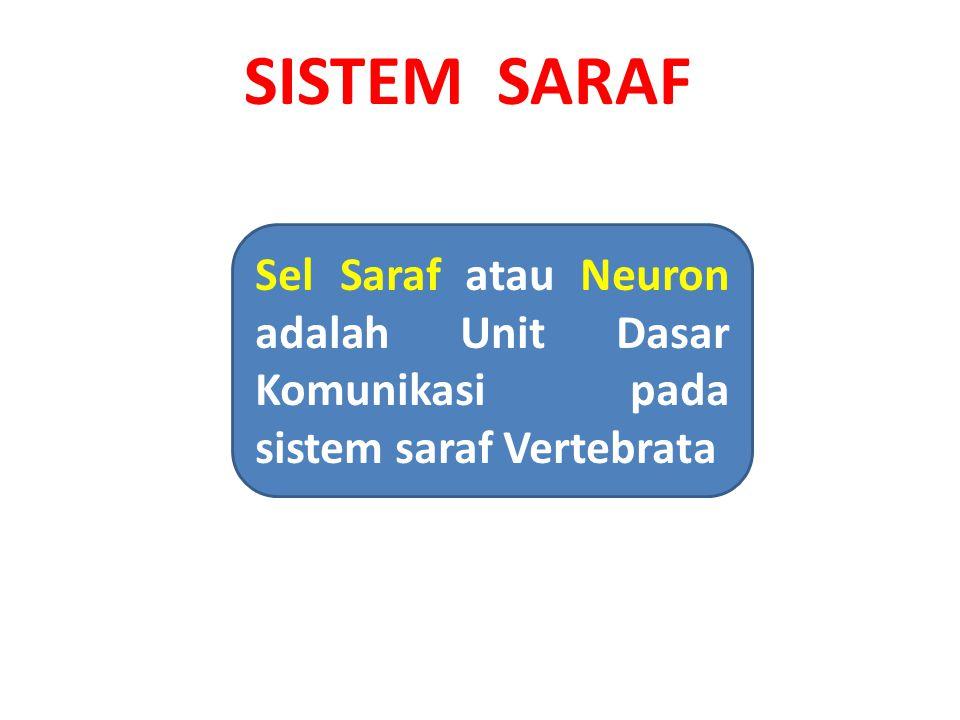 Gambaran Umum Sistem Saraf SISTEM SARAF Analog dengan telepon Berfungsi Sebagai:  Input Sensori  Integrasi  Output Motoris ' Tersusun atas Neuron dan sel- sel pendukung