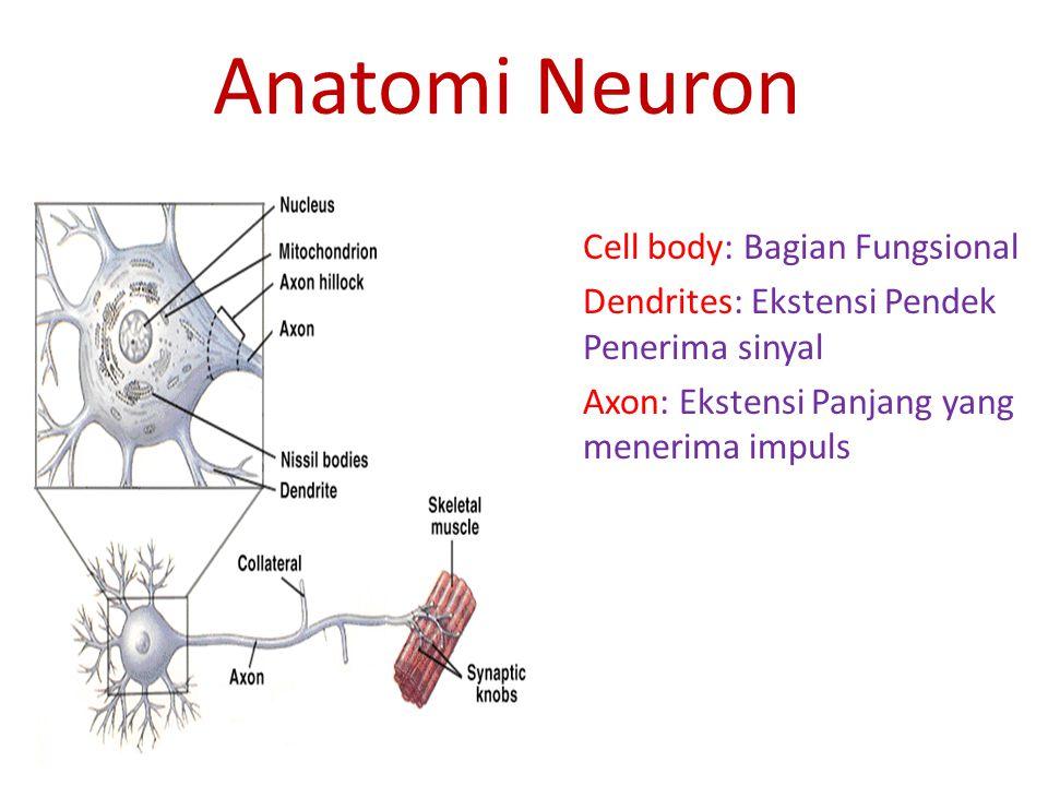 Tipe Neuron dalam Sistem Saraf