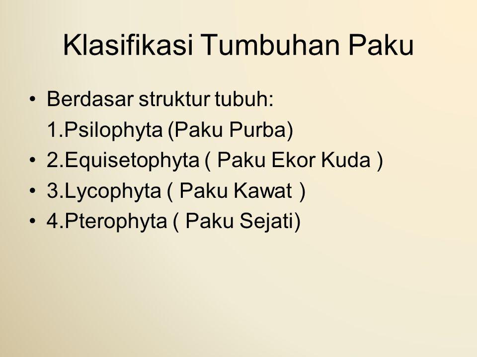 Klasifikasi Tumbuhan Paku Berdasar struktur tubuh: 1.Psilophyta (Paku Purba) 2.Equisetophyta ( Paku Ekor Kuda ) 3.Lycophyta ( Paku Kawat ) 4.Pterophyt