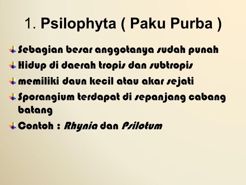 1. Psilophyta ( Paku Purba ) Sebagian besar anggotanya sudah punah Hidup di daerah tropis dan subtropis memiliki daun kecil atau akar sejati Sporangiu