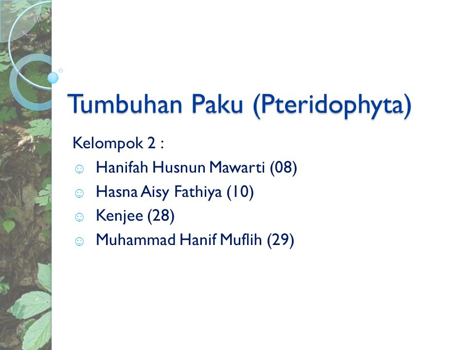 Tumbuhan Paku (Pteridophyta) Nama latinnya (Pteridophyta) berasal dari bahasa Yunani (pteron = bulu, phyton = tumbuhan).