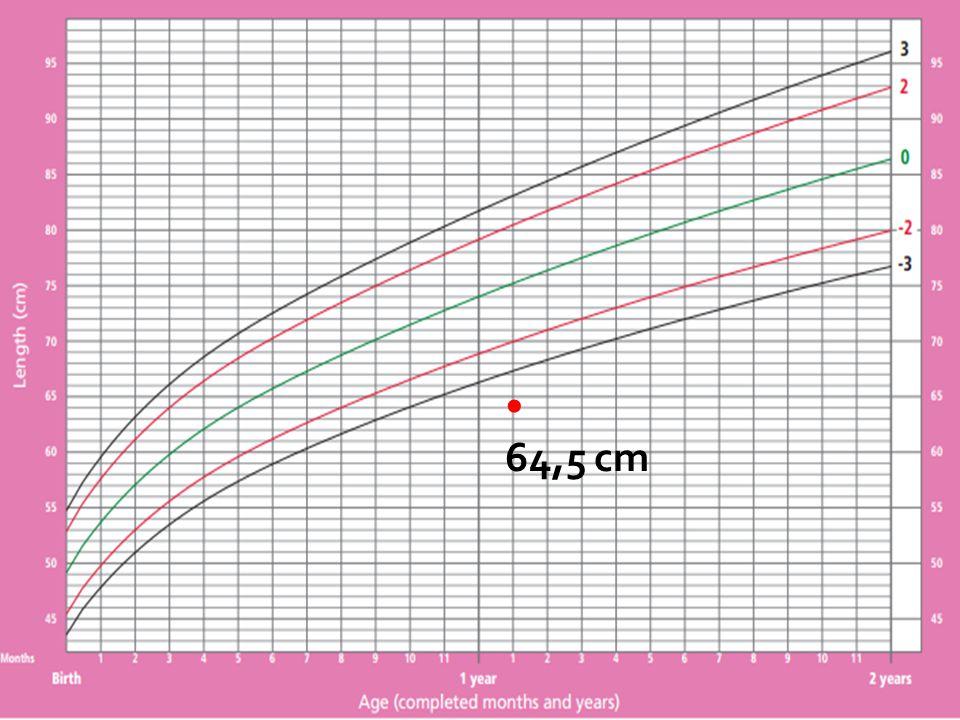 64,5 cm