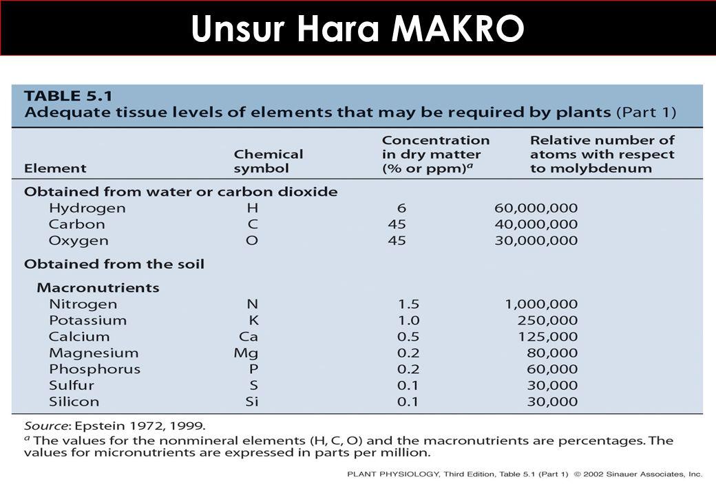 Unsur Hara MAKRO