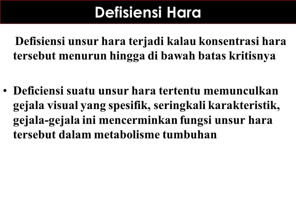 Defisiensi Hara Defisiensi unsur hara terjadi kalau konsentrasi hara tersebut menurun hingga di bawah batas kritisnya Deficiensi suatu unsur hara tert
