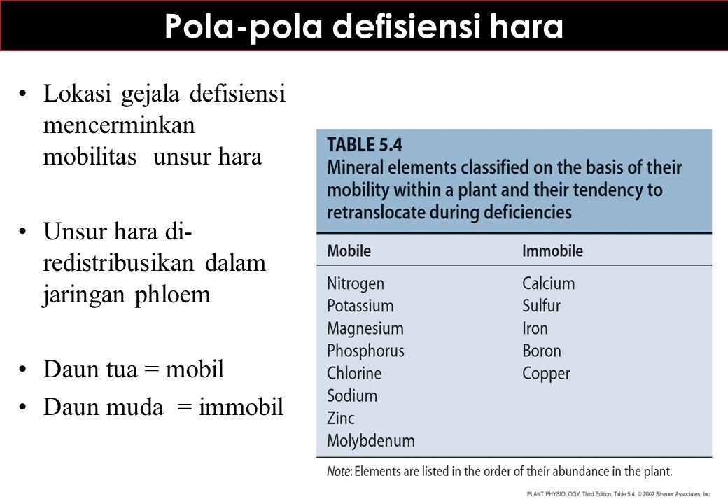 Pola-pola defisiensi hara Lokasi gejala defisiensi mencerminkan mobilitas unsur hara Unsur hara di- redistribusikan dalam jaringan phloem Daun tua = m