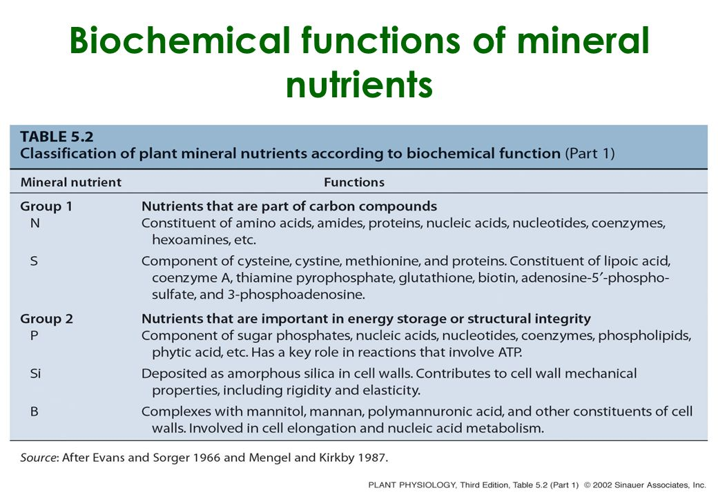 Biochemical functions of mineral nutrients