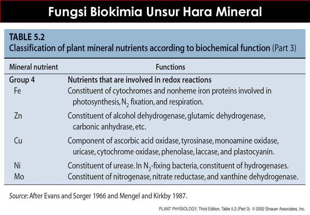 Fungsi Biokimia Unsur Hara Mineral