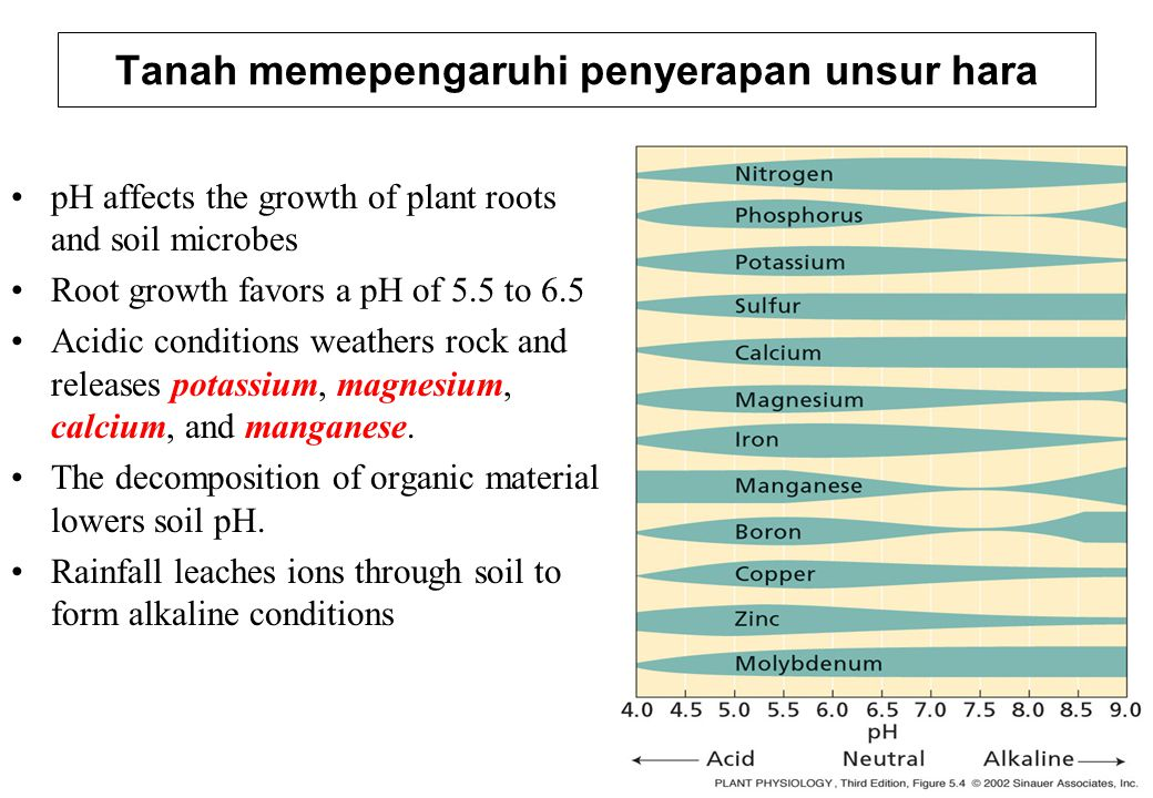 pH affects the growth of plant roots and soil microbes Root growth favors a pH of 5.5 to 6.5 Acidic conditions weathers rock and releases potassium, m