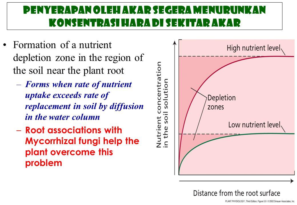 Penyerapan oleh akar segera menurunkan konsentrasi hara di sekitar akar Formation of a nutrient depletion zone in the region of the soil near the plan