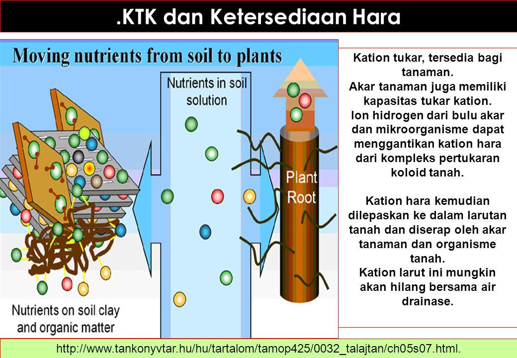.KTK dan Ketersediaan Hara Kation tukar, tersedia bagi tanaman. Akar tanaman juga memiliki kapasitas tukar kation. Ion hidrogen dari bulu akar dan mik