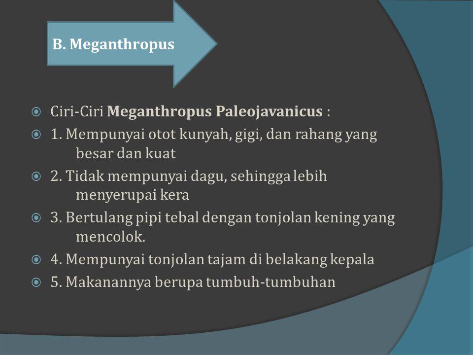 C) Pithecanthropus Soloensis  Sebelum menemukan Meganthropus palaeojavanicus, pada tahun 1931 Von Koenigswald juga berhasil menemukan tengkorak dan t