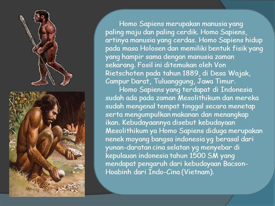 C) HOMO  Manusia purba dari genus Homo adalah jenis manusia purba yang berumur paling muda, fosil manusia purba jenis ini diperkirakan berasal dari 1