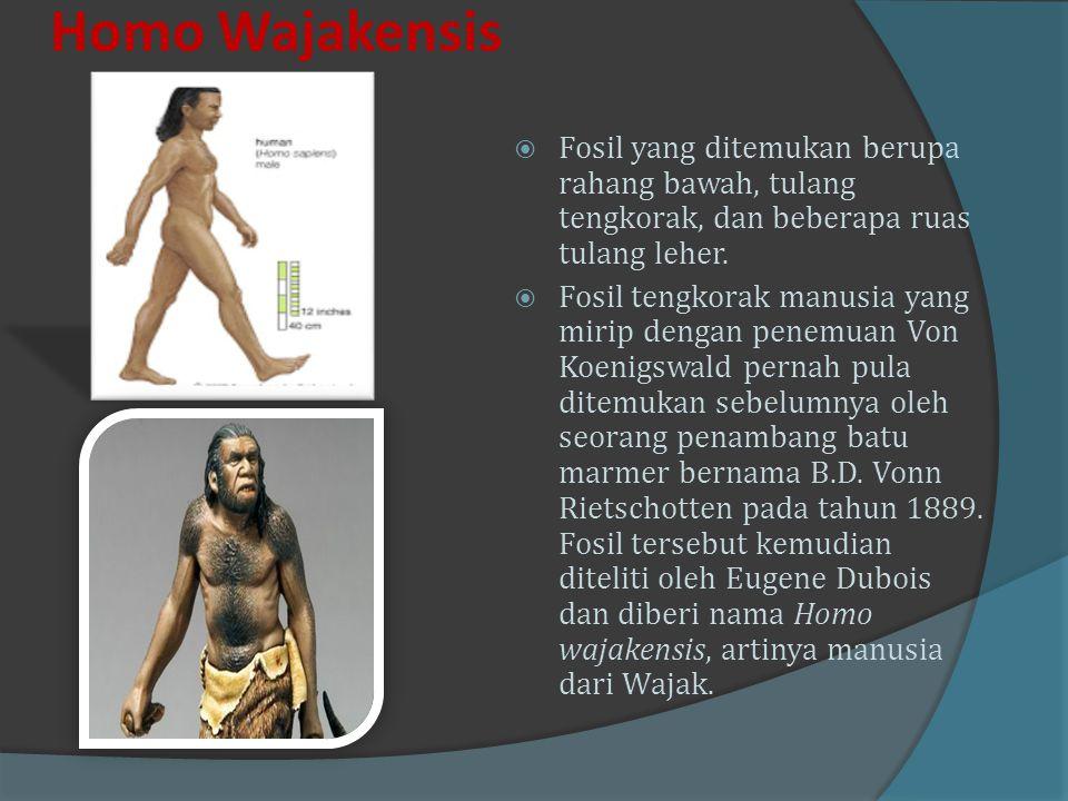  Homo Soloensis  Manusia purba jenis Homo soloensis ditemukan oleh Von Koeningswald dan Weidenrich antara tahun 1931-1934 disekitar sungai bengawan