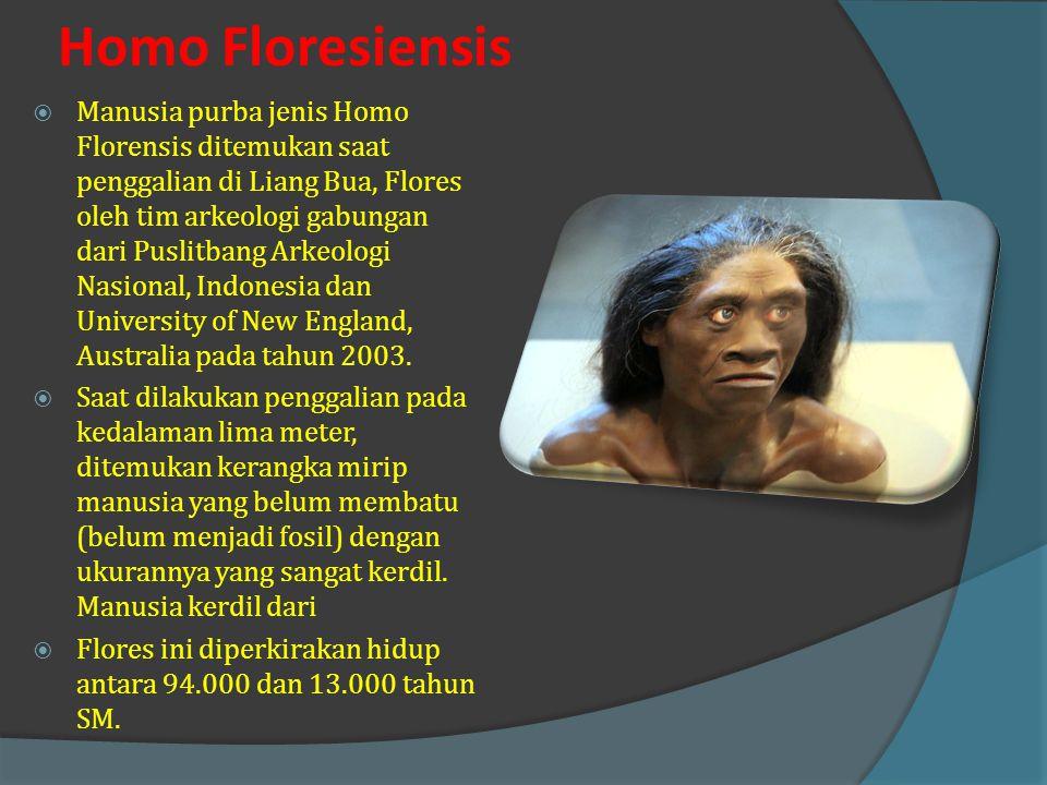 Homo Wajakensis  Fosil yang ditemukan berupa rahang bawah, tulang tengkorak, dan beberapa ruas tulang leher.  Fosil tengkorak manusia yang mirip den