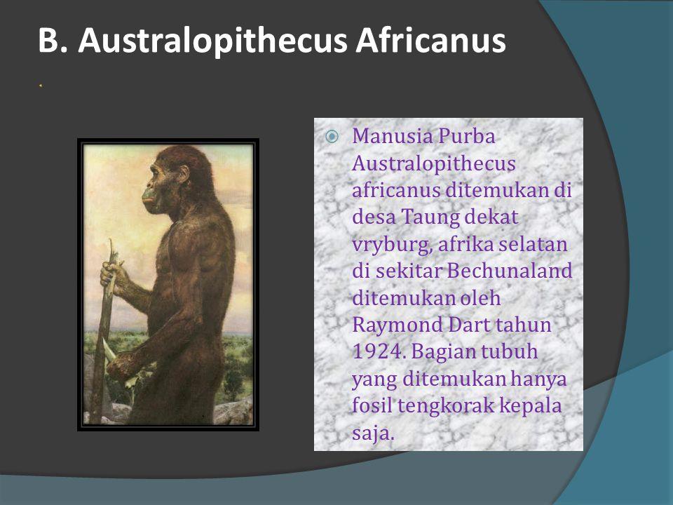 A. Homo Africanus (Homo Rhodesiensis)  Ditemukan oleh Raymond Dart dan Robert Brom pada tahun 1924 di goa Broken Hill, Rhodesia (Zimbabwe).