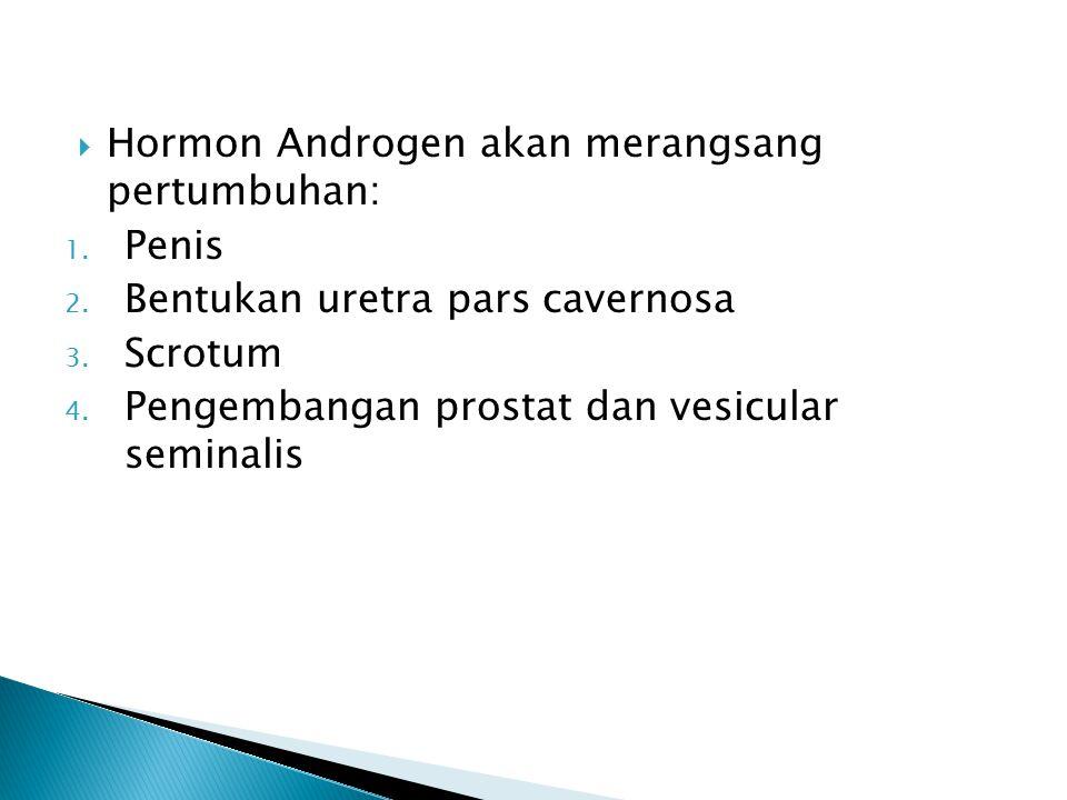  Hormon Androgen akan merangsang pertumbuhan: 1. Penis 2. Bentukan uretra pars cavernosa 3. Scrotum 4. Pengembangan prostat dan vesicular seminalis