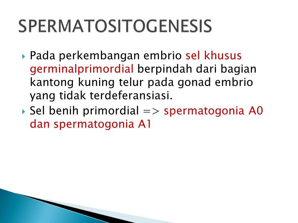  Pada perkembangan embrio sel khusus germinalprimordial berpindah dari bagian kantong kuning telur pada gonad embrio yang tidak terdeferansiasi.  Se