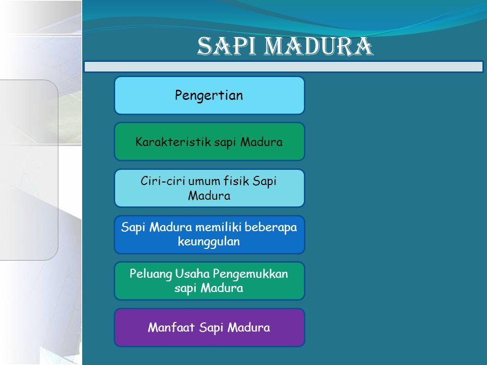 SAPI MADURA Pengertian Karakteristik sapi Madura Ciri-ciri umum fisik Sapi Madura Sapi Madura memiliki beberapa keunggulan Peluang Usaha Pengemukkan sapi Madura Manfaat Sapi Madura