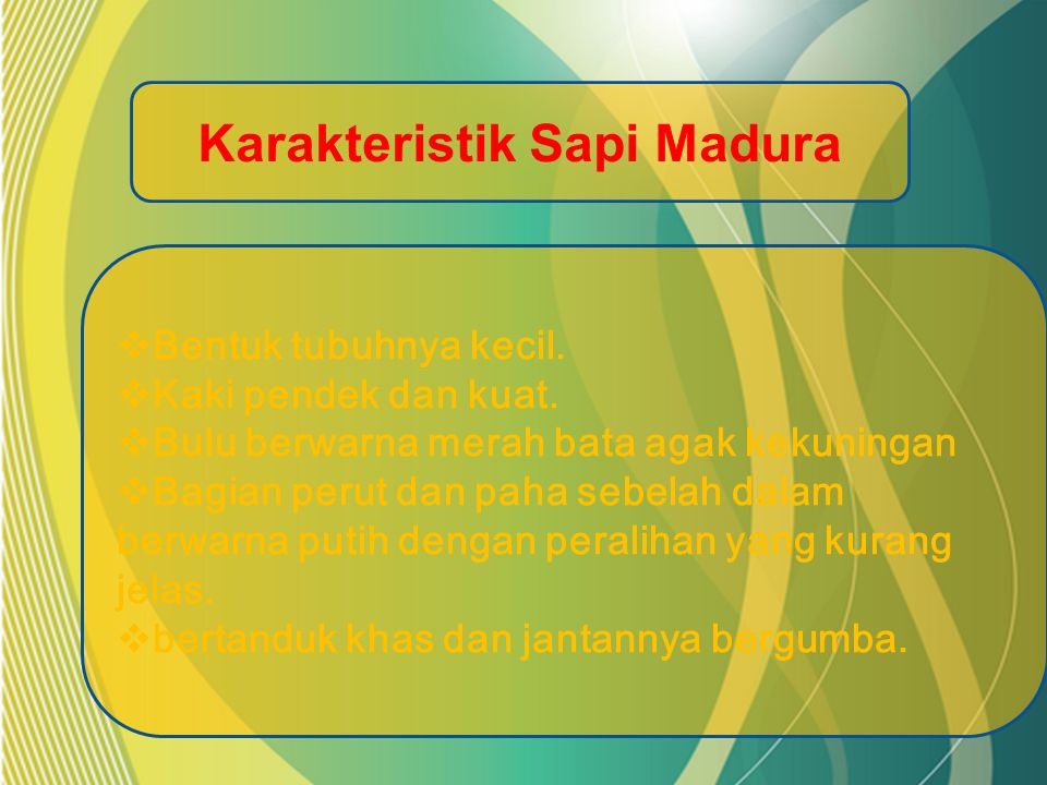 Karakteristik Sapi Madura BBentuk tubuhnya kecil.