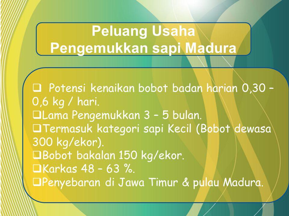  Potensi kenaikan bobot badan harian 0,30 – 0,6 kg / hari.