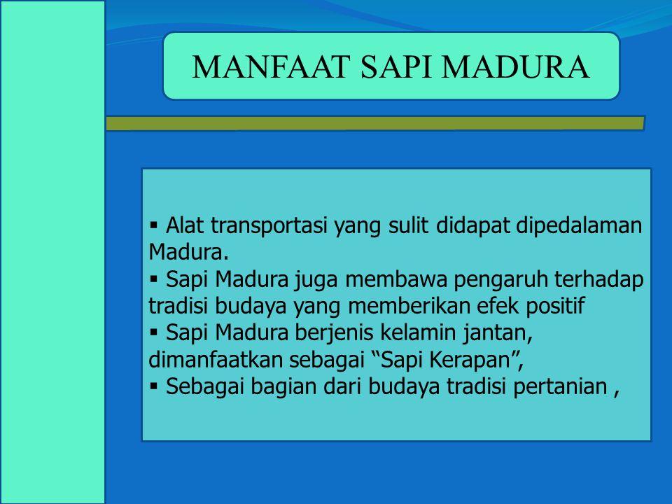  Alat transportasi yang sulit didapat dipedalaman Madura.  Sapi Madura juga membawa pengaruh terhadap tradisi budaya yang memberikan efek positif 