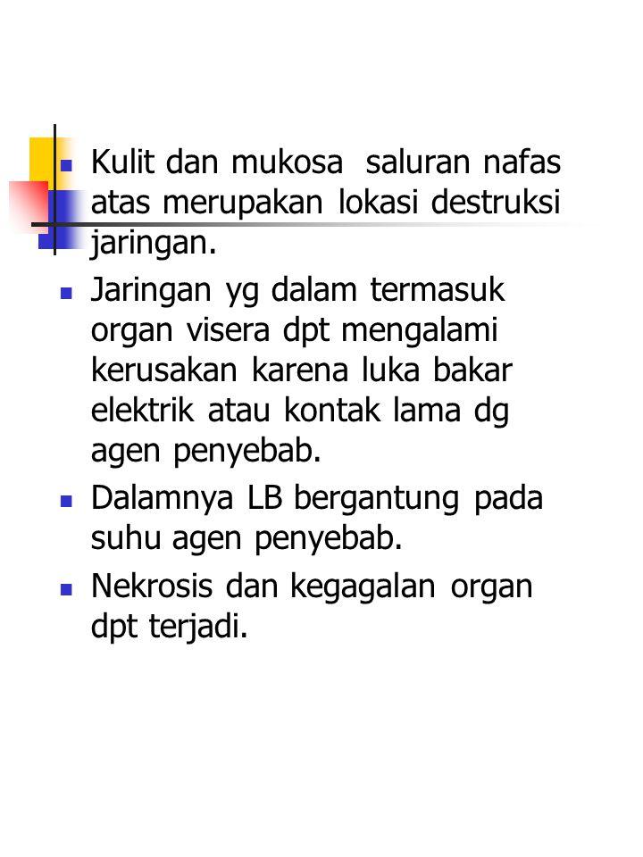 LB Derajat Tiga : Destruksi total epidermis serta dermis dan pd sebagian kasus, jaringan yg ada dibawahnya.