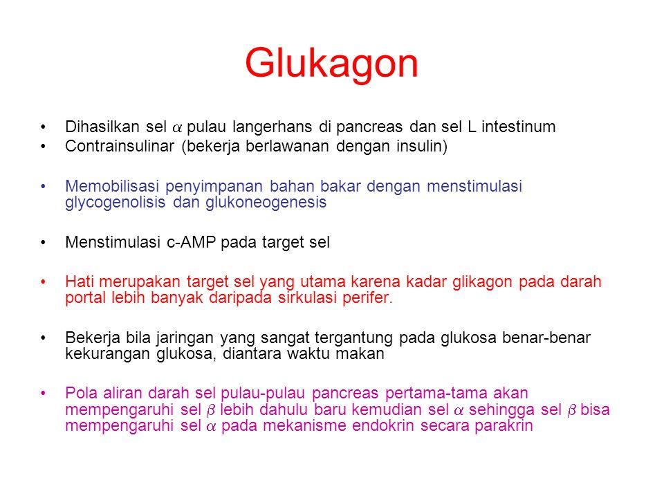 Glukagon Dihasilkan sel  pulau langerhans di pancreas dan sel L intestinum Contrainsulinar (bekerja berlawanan dengan insulin) Memobilisasi penyimpan