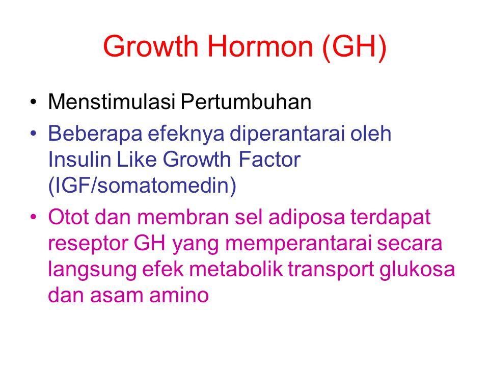 Growth Hormon (GH) Menstimulasi Pertumbuhan Beberapa efeknya diperantarai oleh Insulin Like Growth Factor (IGF/somatomedin) Otot dan membran sel adipo