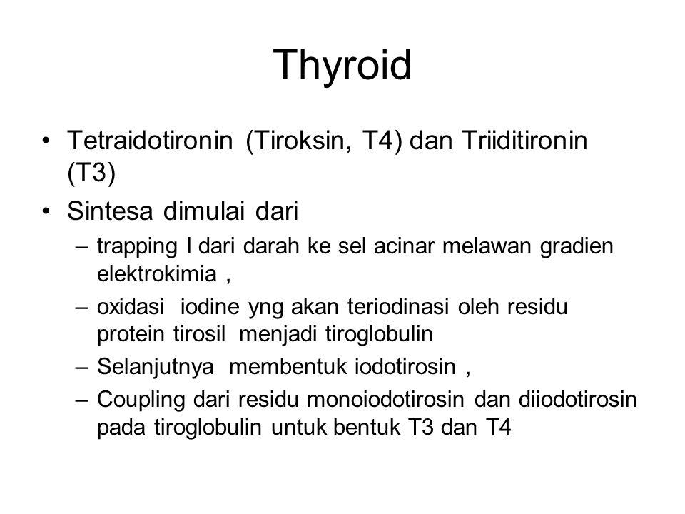 Thyroid Tetraidotironin (Tiroksin, T4) dan Triiditironin (T3) Sintesa dimulai dari –trapping I dari darah ke sel acinar melawan gradien elektrokimia,