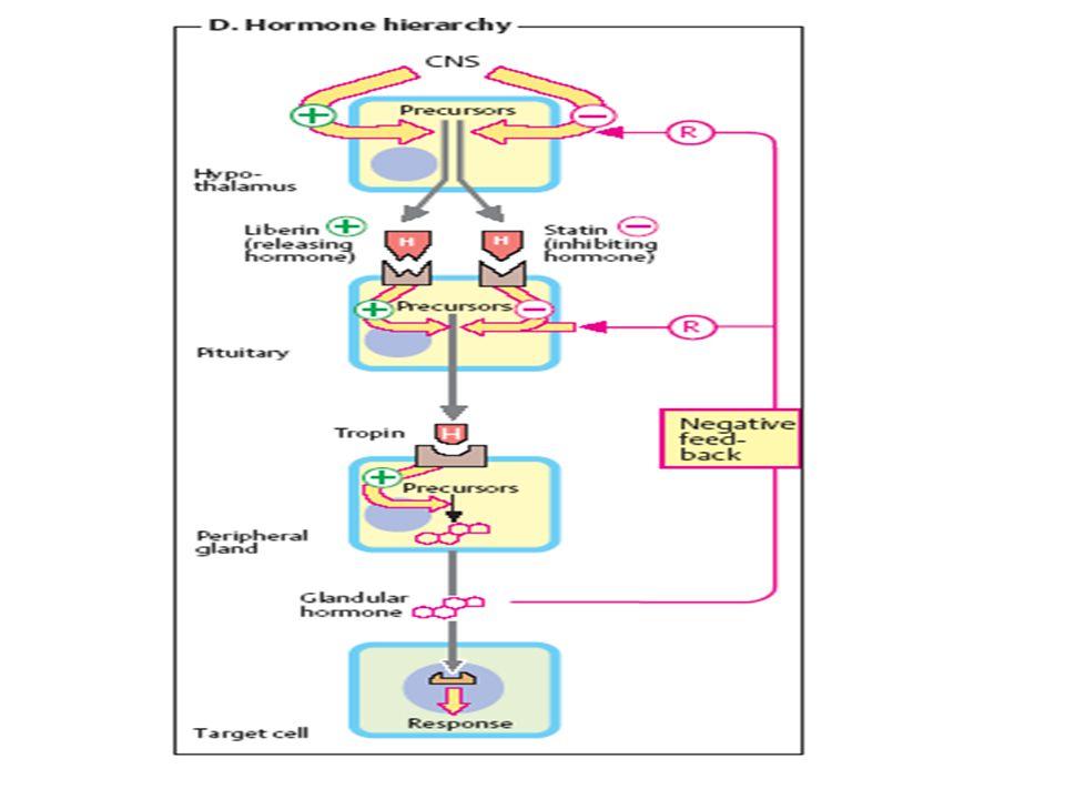 Efek GH –peningkatan lipolisis, –hambatan lipoprotein lipase, –stimulasi hormon sensitive lipase, –penurunan transport glukosa, –penurunan lipogenesis –Peningkatan transport asam amino –Peningkatan retensi Nitrogen –Menurunkan lemak jaringan –Meningkatkan penggunaan Energi –Menurunkan sensitivitas insulin sehingga mengarah pada mobilisasi FFA (free fatty acid) dan gliserol