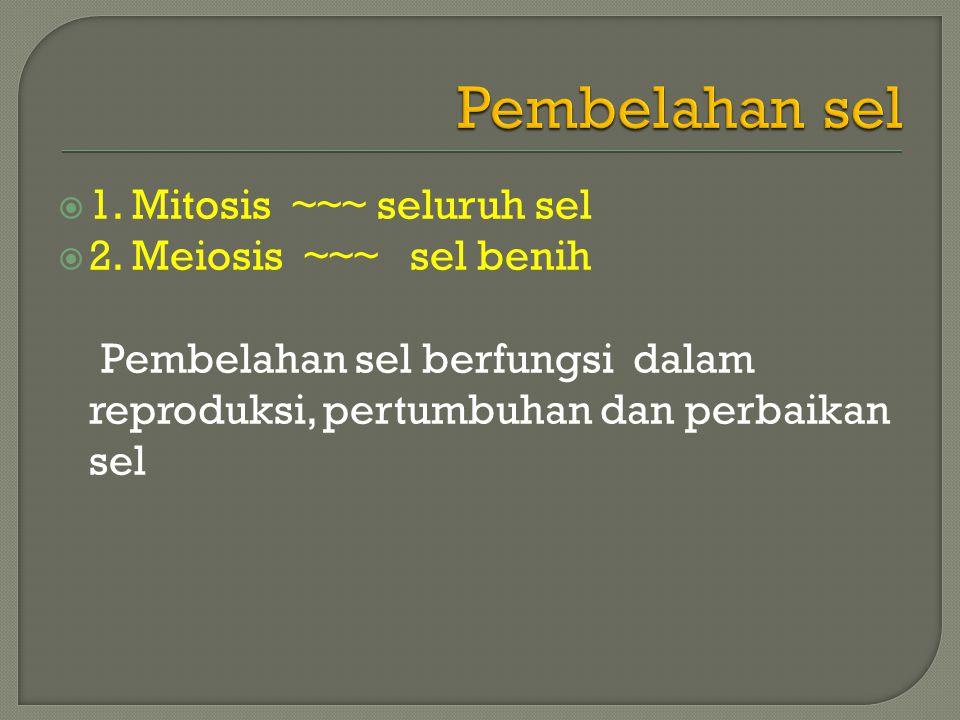  1.Mitosis ~~~ seluruh sel  2.