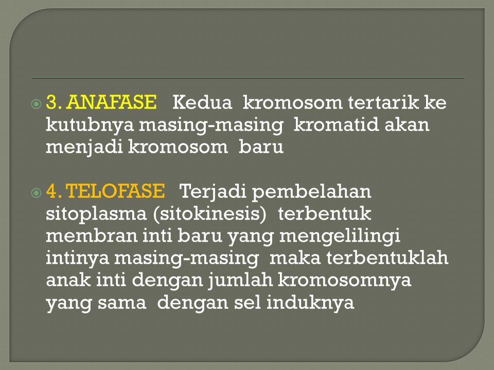  Meiosis dan mitosis hampir sama caranya hanya yg berbeda perilaku pembelahan kromosom pada meiosis I  Meiosis dibedakan atas meiosis I dan meiosis II  Meiosis I dibedakan pula atas Profase I terdiri dari leptoten zygoten pakiten diploten dan diakinese Metafase I Anafase I Telofase I