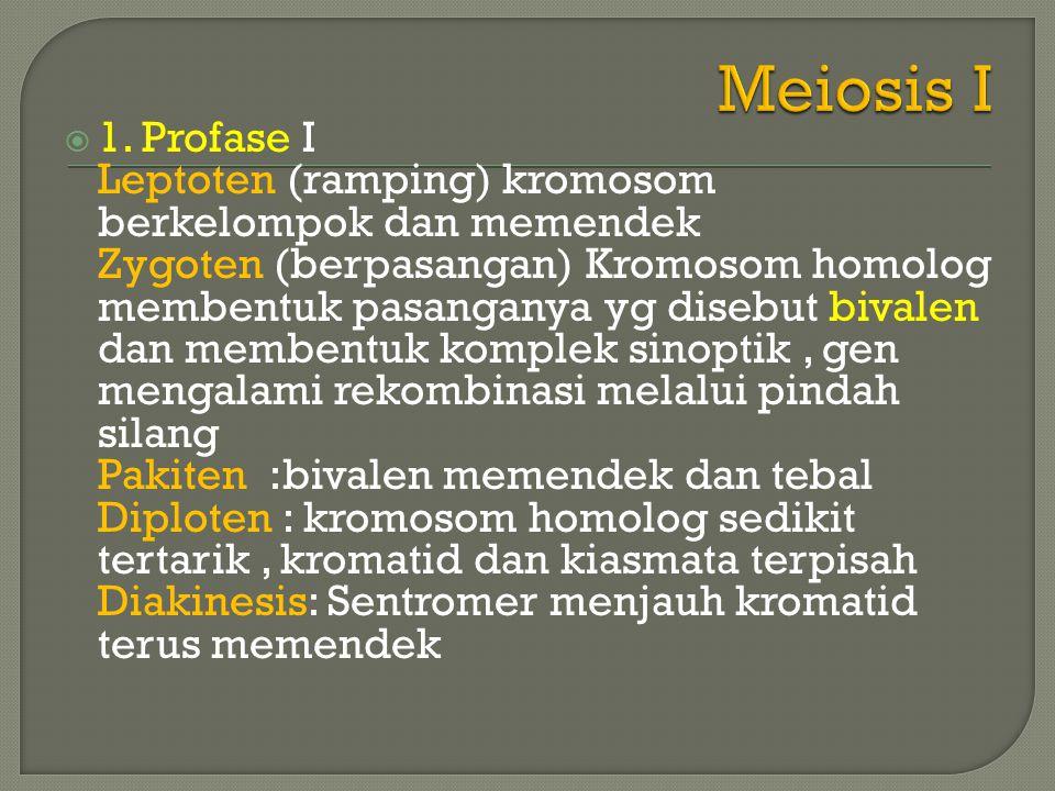  Pada zygoten dan pakiten kromosom homolog berpasangan menurut panjangnya disebut synopsis (hanya terjadi pada meiosis) dan titik tempat menempelnya disebut kiasma.
