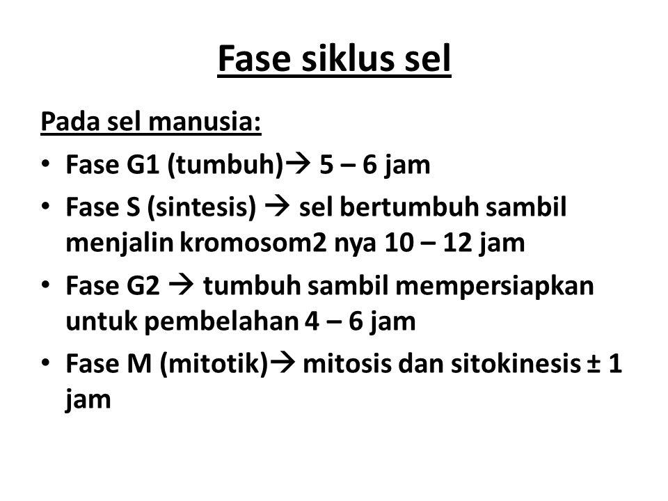 Mitosis & sitokinesis G 2 Interfase Mitosis 1.Profase 2.Prometafase 3.Metafase 4.Anafase 5.Telofase