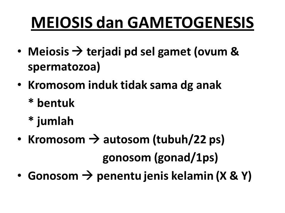 MEIOSIS Interfase MEIOSIS I Profase I Metafase I Anafase I Telofase I dan sitokinesis MEIOSIS II Profase II Metafase II Anafase II Telofase II dan sitokinesis