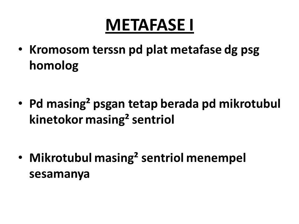 ANAFASE I Serat gelendong menggerakan kromosom ke arah kutub dg psngan kromatid ttp terikat pd sentromer Bedanya dg mitosis: 1.
