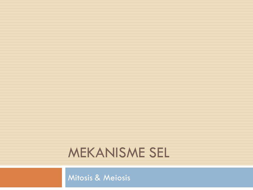  Pembelahan meiosis disebut juga pembelahan reduksi., yaitu pembelahan sel induk diploid menghasilkan 4 sel anakan haploid.