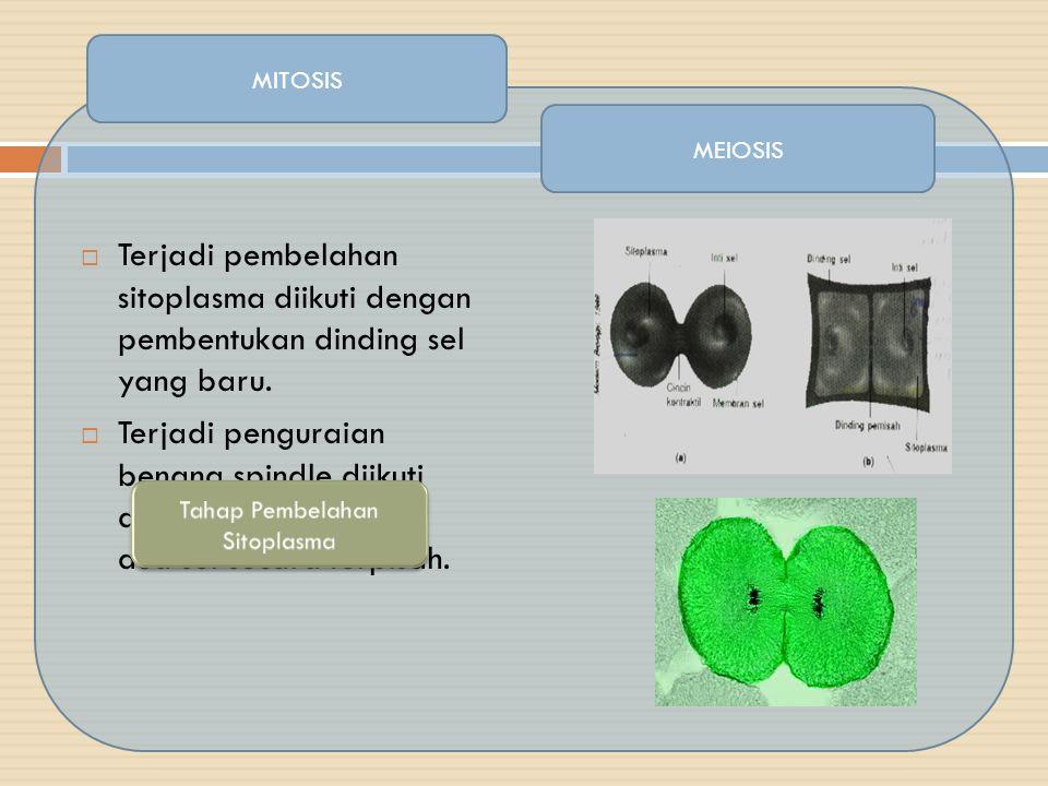 MEIOSIS  Terjadi pembelahan sitoplasma diikuti dengan pembentukan dinding sel yang baru.  Terjadi penguraian benang spindle diikuti dengan pembagian