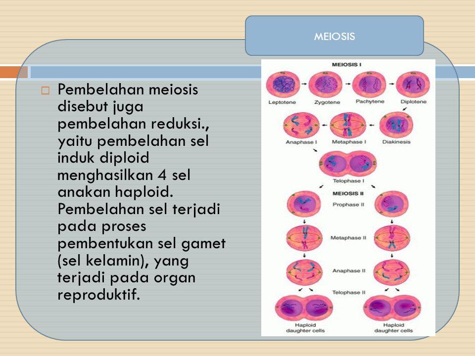  Pembelahan meiosis disebut juga pembelahan reduksi., yaitu pembelahan sel induk diploid menghasilkan 4 sel anakan haploid. Pembelahan sel terjadi pa