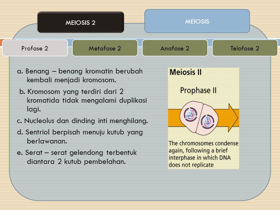 a. Benang – benang kromatin berubah kembali menjadi kromosom. b. Kromosom yang terdiri dari 2 kromatida tidak mengalami duplikasi lagi. c. Nucleolus d