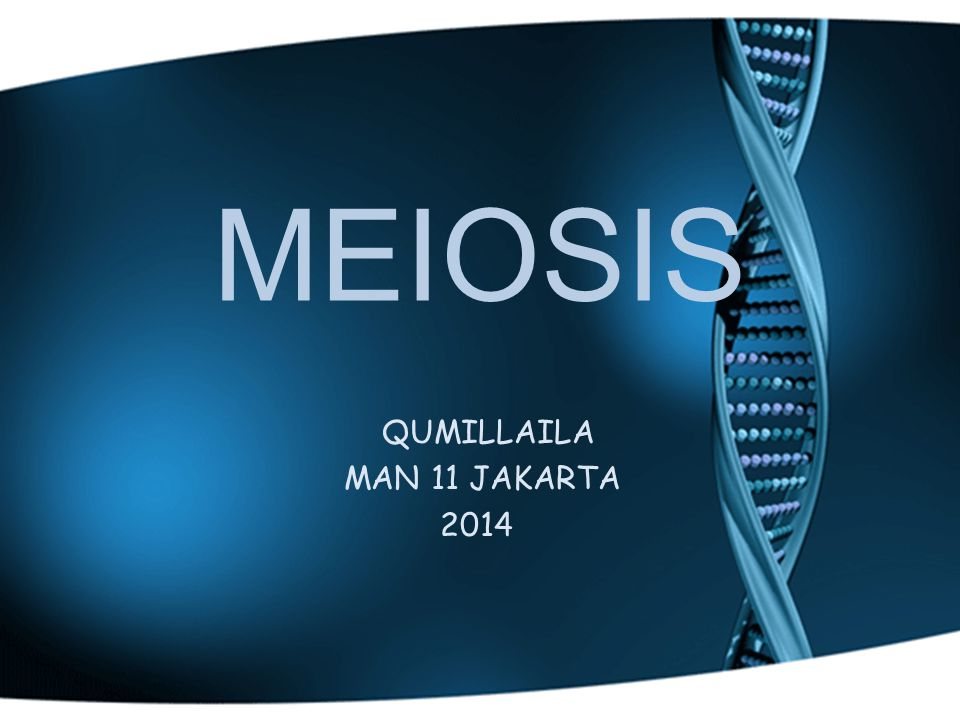 MEIOSIS QUMILLAILA MAN 11 JAKARTA 2014