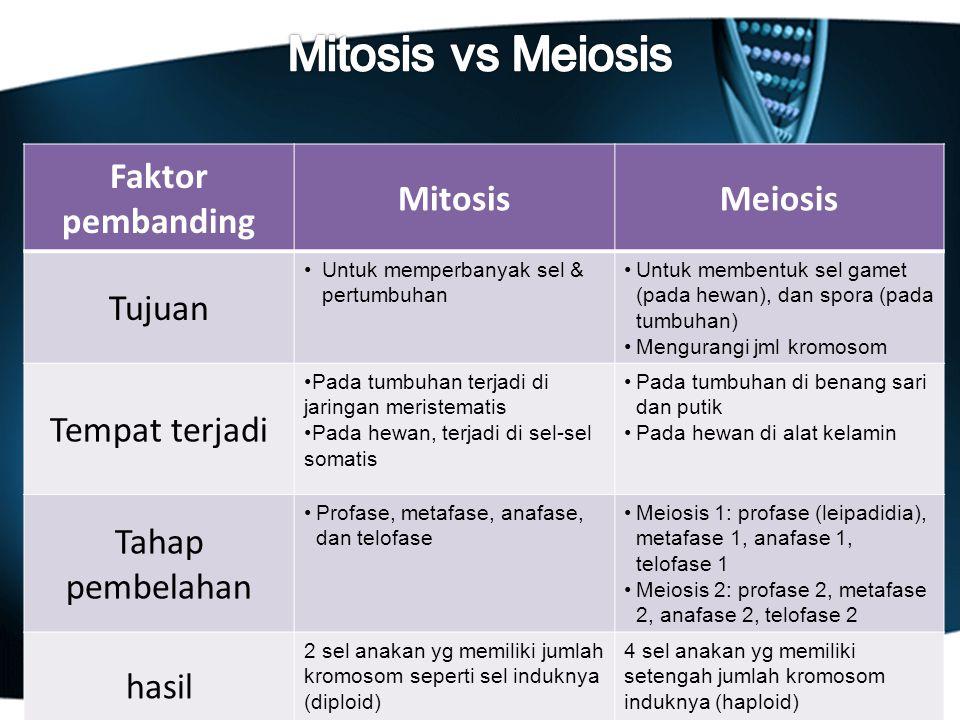 Faktor pembanding MitosisMeiosis Tujuan Untuk memperbanyak sel & pertumbuhan Untuk membentuk sel gamet (pada hewan), dan spora (pada tumbuhan) Mengura