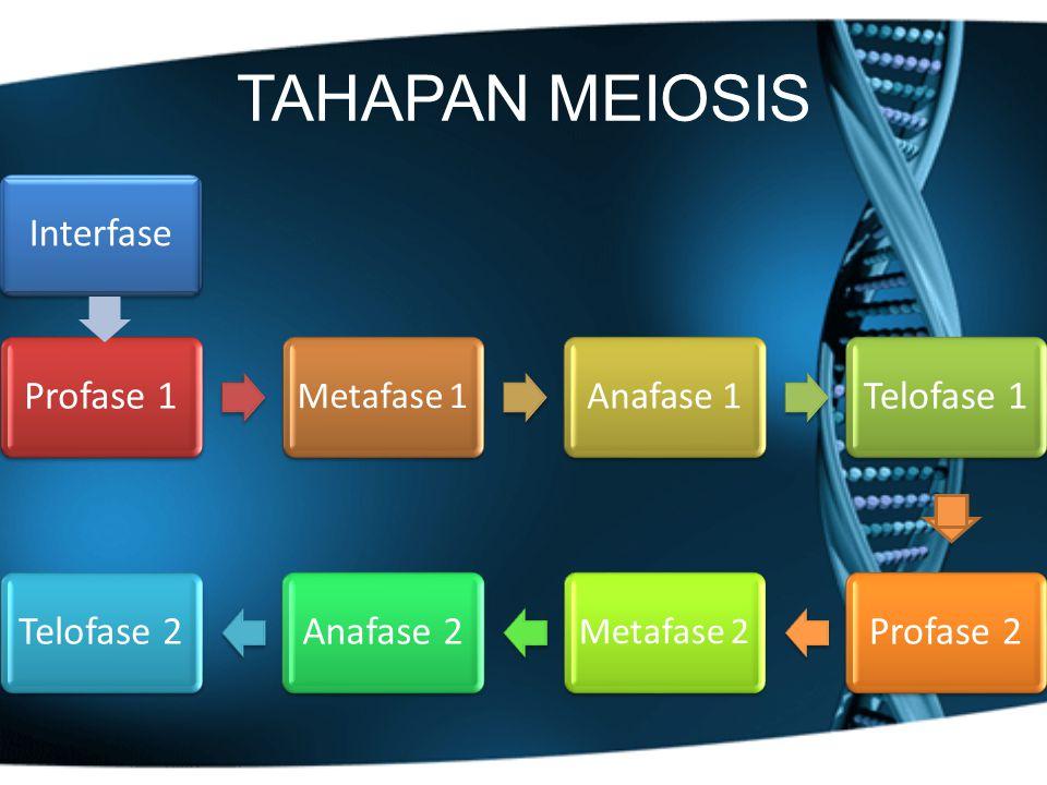 TAHAPAN MEIOSIS Profase 1 Metafase 1 Anafase 1 Telofase 1Telofase 2Anafase 2 Metafase 2 Profase 2 Interfase