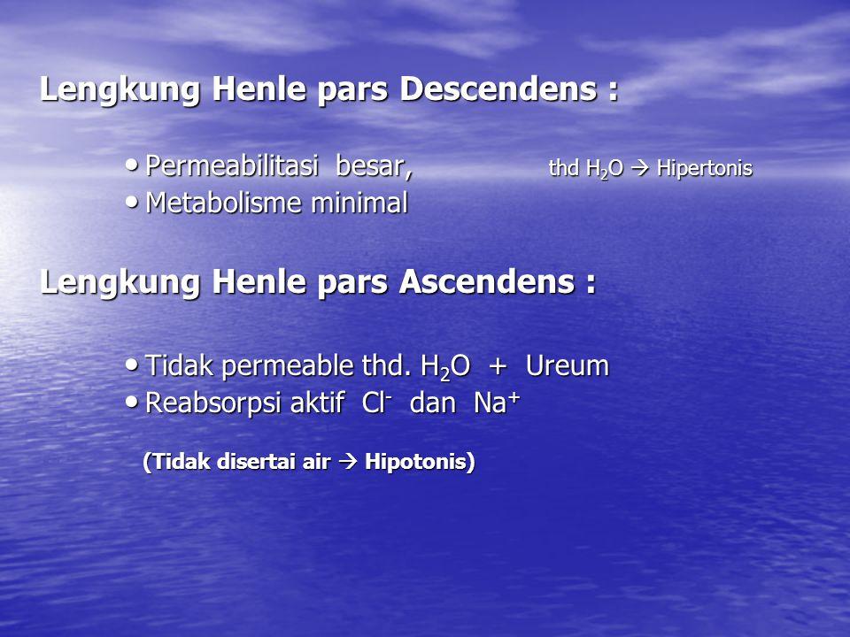 Lengkung Henle pars Descendens : Permeabilitasi besar, thd H 2 O  Hipertonis Permeabilitasi besar, thd H 2 O  Hipertonis Metabolisme minimal Metabolisme minimal Lengkung Henle pars Ascendens : Tidak permeable thd.