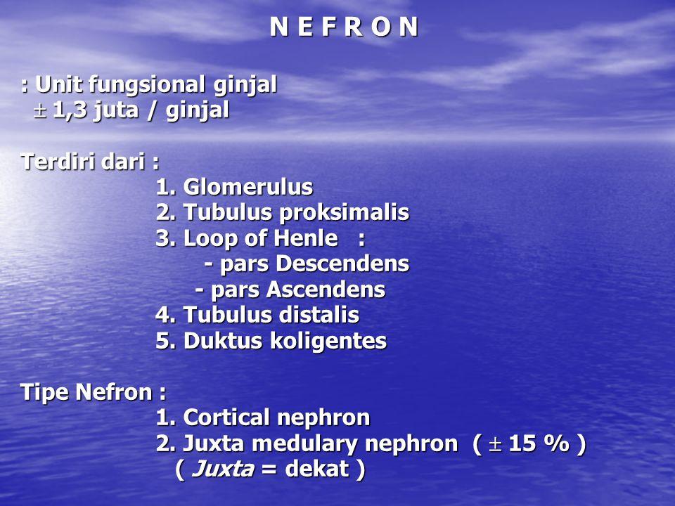G F R (Glomerular Filtration Rate) : Jumlah filtrat yang disaring dari plasma Jumlah filtrat yang disaring dari plasma dalam satu menit.