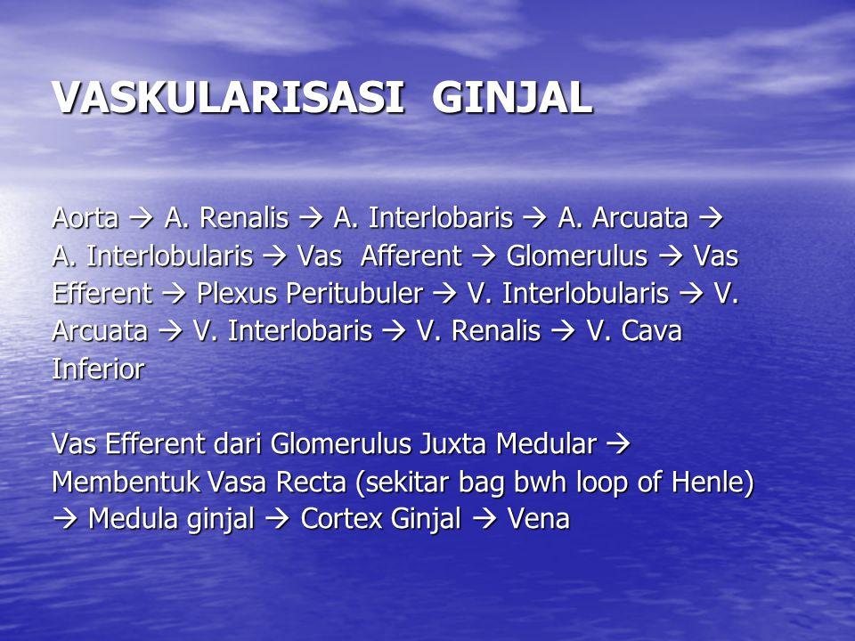 VASKULARISASI GINJAL Aorta  A.Renalis  A. Interlobaris  A.
