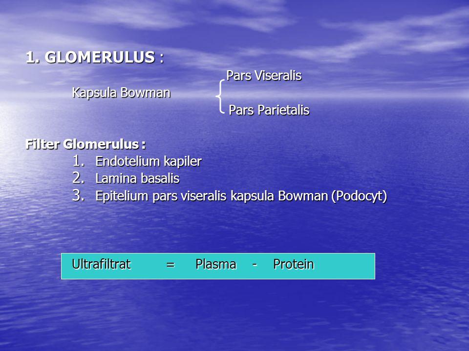 1. GLOMERULUS : Pars Viseralis Pars Viseralis Kapsula Bowman Kapsula Bowman Pars Parietalis Pars Parietalis Filter Glomerulus : 1. Endotelium kapiler