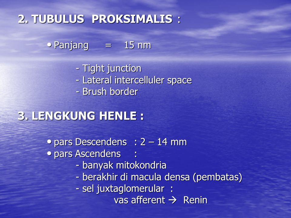 2. TUBULUS PROKSIMALIS : Panjang= 15 nm Panjang= 15 nm - Tight junction - Lateral intercelluler space - Brush border 3. LENGKUNG HENLE : pars Descende